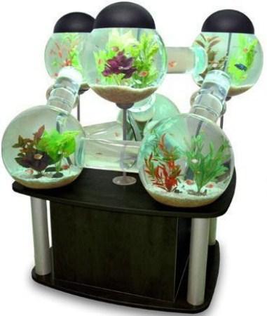 Akvarij U Domu
